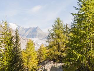 Riederalp, Bergdorf, Aletschwald, Gletscher, Wallis, Schweiz
