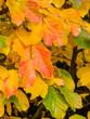canvas print picture - Blatt und Baum im Herbst
