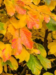 Blatt und Baum im Herbst