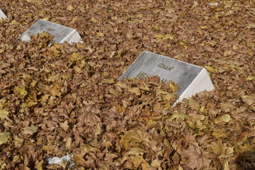 Солдатские могилы, занесенные желтой листвой