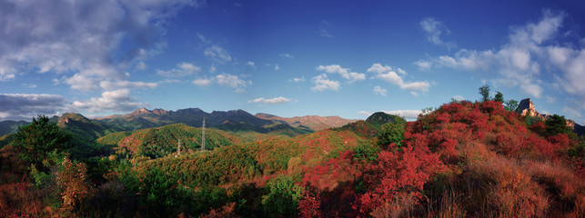 secondary forest and mountains in colorful autumn