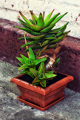 care home decorative potted plant