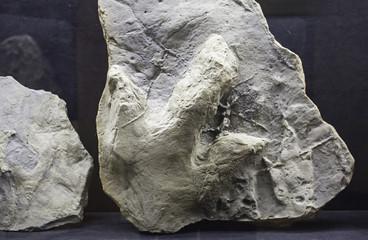 Old Dinosaur Footprint