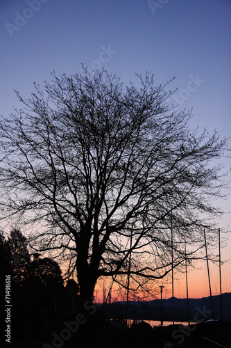 canvas print picture Silhouette tree in Lindau