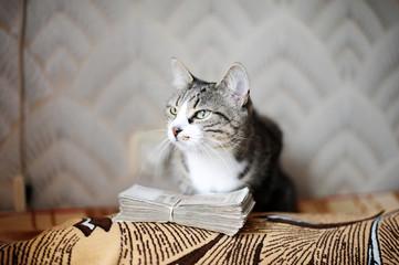 cat with money