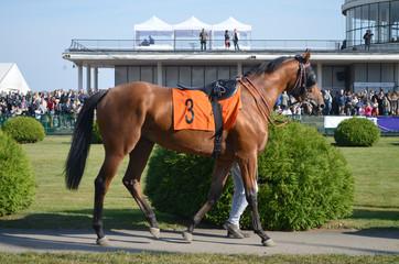 Koń Wyścigowy