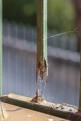 broken and rusty railing