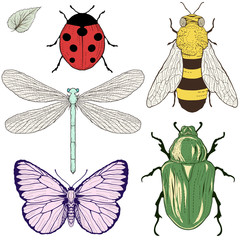 insects set drawing