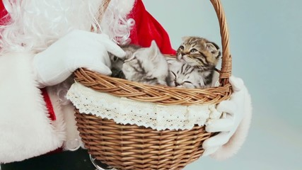Santa Claus holds a basket with beautiful kittens