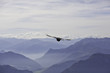 Flug einer Almdohle in den Bayrischen Alpen