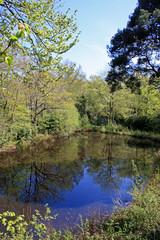 Stover Country Park, Devon