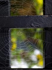 cobweb with morning dew