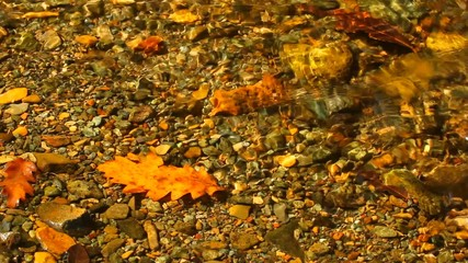 dry, yellow leaf in a creek water