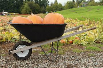 Pumpkins in a Wheelbarrow