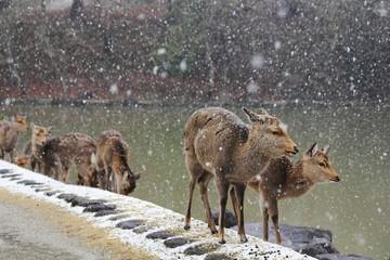 鹿と雪の降る鷺池