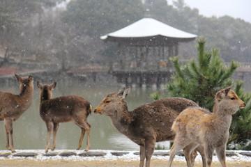 雪景色 鹿と浮見堂