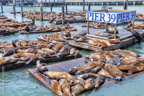Poster Sea lions on pier 39 in San Francisco, USA.