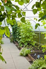 green house edible vegetable plants