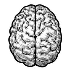 Digital brain