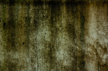 Old concrete wall and moss.