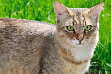 cat on background of green grass