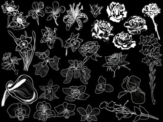 large set of white flowers sketches