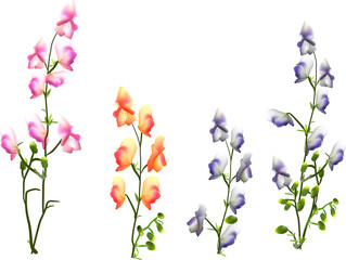 isolated color flowers on long stems