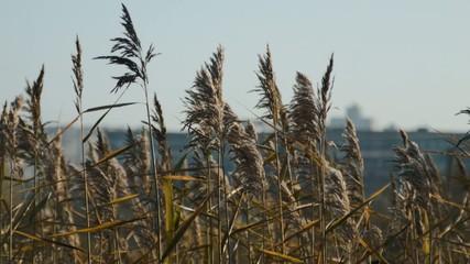 Wild grass, Nature landscape, Closeup.
