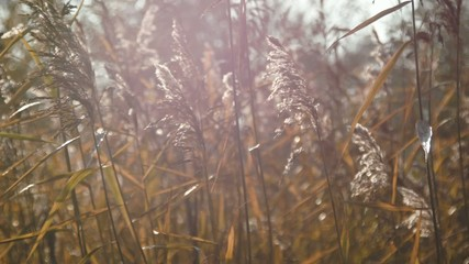 Wild grass, Nature landscape, Closeup.