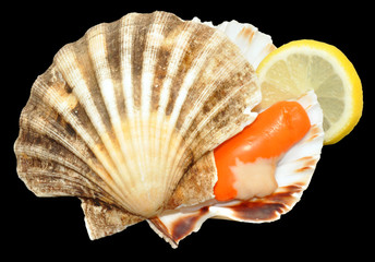 Raw King Scallop