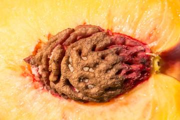 Nectarine Fruit Interior Close Up