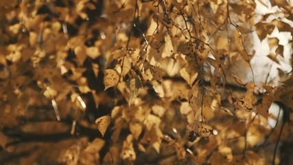 Autumn. Trees. Golden leaves.