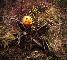 Pumpkin head on the snag in the forest