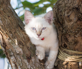 child cat blue eye on tree