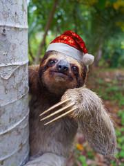 Christmas animal a sloth wearing santa hat