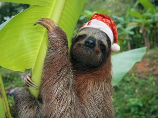 Christmas animal sloth wearing a santa hat