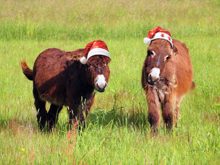 Christmas animals donkey eating grass in santa hat
