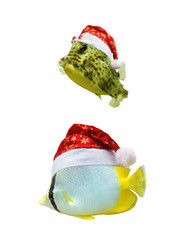 Christmas tropical fish in santa hat isolated