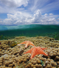 Over under water starfish on coral and cloudy sky