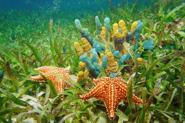 Underwater life with colorful sponges and starfish
