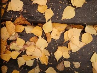 жёлтые листья на доске
