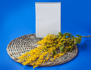 Mimosa branch next to a blank page notebook