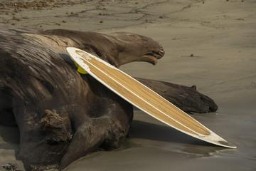 Tavola da surf abbandonata sulla spiaggia