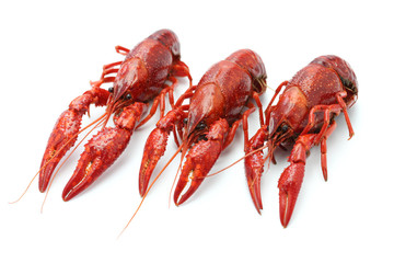 three crawfish on white background