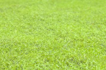Artificial Grass (Select focus)