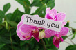 Thank you card with pink orchid