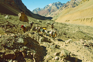 Mules  Caravan  in the Mountains