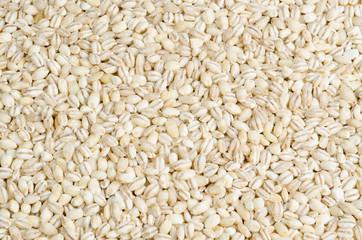barley closeup, background