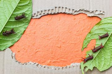 Leaf worm blank photo.  paper background