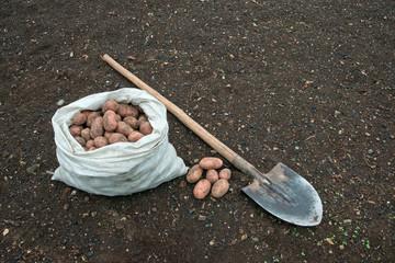 Картофель в мешке и лопата